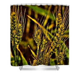 Ripening Wheat Shower Curtain by David Patterson