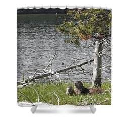 River Otter Shower Curtain by Belinda Greb