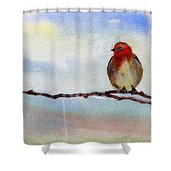 Robin 1 Shower Curtain by Anil Nene