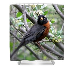 Robin In The Morning Shower Curtain