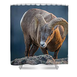 Rocky Mountain Big Horn Ram Shower Curtain