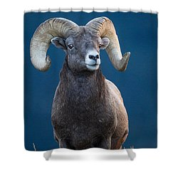 Rocky Mountain Big Horn Shower Curtain