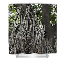 Roots From A Large Tree Inside Jallianwala Bagh Shower Curtain by Ashish Agarwal
