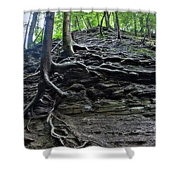 Roots In Shale Shower Curtain by Ted Kinsman