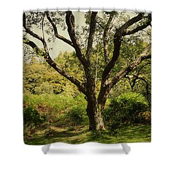 Roots Of Wisdom. Colorful Version. Wicklow Hills. Ireland  Shower Curtain by Jenny Rainbow