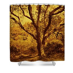 Roots Of Wisdom. Wicklow Hills. Ireland  Shower Curtain by Jenny Rainbow