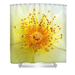 Rosa Golden Wings Shower Curtain