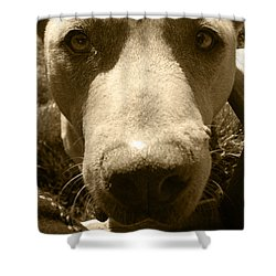 Shower Curtain featuring the photograph Roscoe Pitbull Eyes by Kym Backland