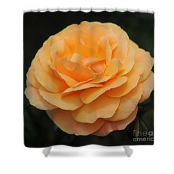 Rose 3 Shower Curtain by Vivian Christopher