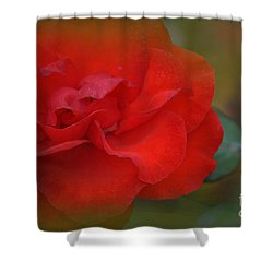 Rose Dream Shower Curtain by Mary Machare