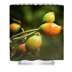 Shower Curtain featuring the photograph Rose Hips by Albert Seger