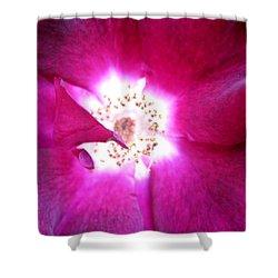Rose Shower Curtain by Leon Zernitsky