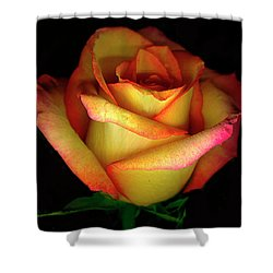 Rose Scan Day 3 No Lid Shower Curtain by Paul Shefferly