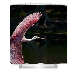 Shower Curtain featuring the photograph Roseate Spoonbill by Steven Sparks