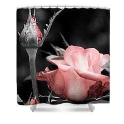 Roses In Pink And Gray Shower Curtain by Michelle Joseph-Long