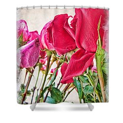 Roses In White Shower Curtain by Joan  Minchak