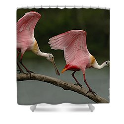 Rosiette Spoonbills Shower Curtain by Bob Christopher