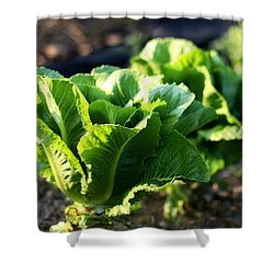Row Of Romaine Shower Curtain by Angela Rath
