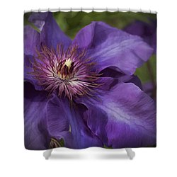 Royal Purple Jackmanii Clematis Blossom Shower Curtain by Kathy Clark