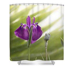 Purple Japanese Water Iris Shower Curtain