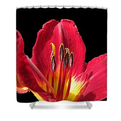 Shower Curtain featuring the photograph Royal Red by Debbie Portwood