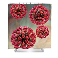 Rubella Virus Particles Shower Curtain