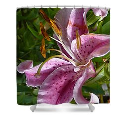 Shower Curtain featuring the photograph Rubrum Lily by Carla Parris