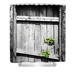 Ruins Shower Curtain by Gaspar Avila
