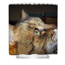 Shower Curtain featuring the photograph Runcius- The King Kitty by Ausra Huntington nee Paulauskaite