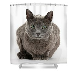 Russian Blue Cat Shower Curtain by Mark Taylor