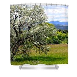 Russian Olive Shower Curtain by Karon Melillo DeVega