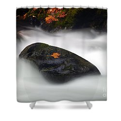 Safe Haven Shower Curtain by Mike  Dawson