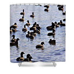 Safety In Numbers Shower Curtain by Douglas Barnard