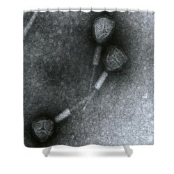Salmonella Phage Shower Curtain by Science Source