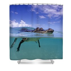 Salt Water Crocodile Shower Curtain by Franco Banfi and Photo Researchers