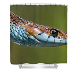 San Francisco Garter Snake Portrait Shower Curtain by Sebastian Kennerknecht