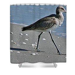 Sandpiper 1 Shower Curtain by Joe Faherty