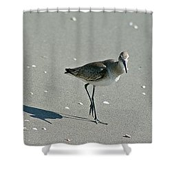 Sandpiper 3 Shower Curtain by Joe Faherty