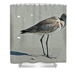 Sandpiper 4 Shower Curtain by Joe Faherty