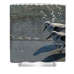 Sandpiper 5 Shower Curtain by Joe Faherty