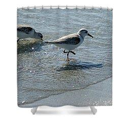 Sandpiper 7 Shower Curtain by Joe Faherty