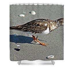 Sandpiper 9 Shower Curtain by Joe Faherty
