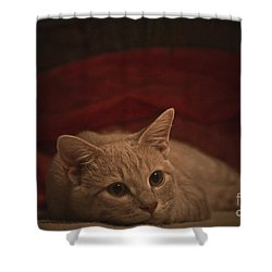 Santa Is Coming Shower Curtain by Kim Henderson