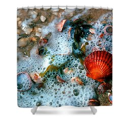 Scallop And Seaweed 11c Shower Curtain by Gerry Gantt