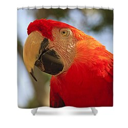 Scarlet Macaw Parrot Shower Curtain by Adam Romanowicz