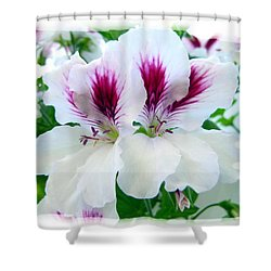 Scented Geraniums 2 Shower Curtain by Will Borden