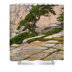 Schoodic Cliffs Shower Curtain by Brent L Ander