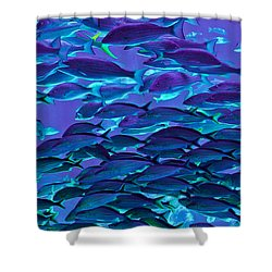 School Daze Shower Curtain by DigiArt Diaries by Vicky B Fuller