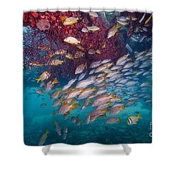 Schools Of Gray Snapper, Yellowtail Shower Curtain by Terry Moore