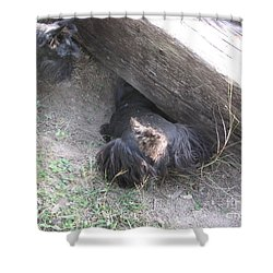 Scotty Armadillo Dance Shower Curtain by Mark Robbins